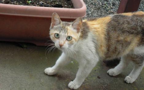 我が家の庭に野良猫が迷いこんで来た時をデジカメ写真撮影したのだった