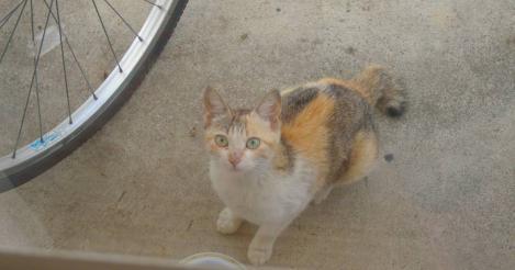 この野良猫が毎日来るのでエサをあげるようにしてあげ野良猫がエサを食べてるのをデジカメ写真撮影したのでした
