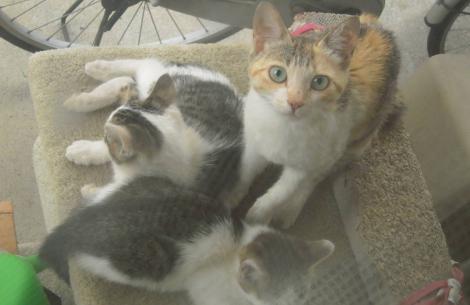 庭先のネコタワーに野良猫の親子が住み始めた時をデジカメ写真撮影に親猫も驚いていた