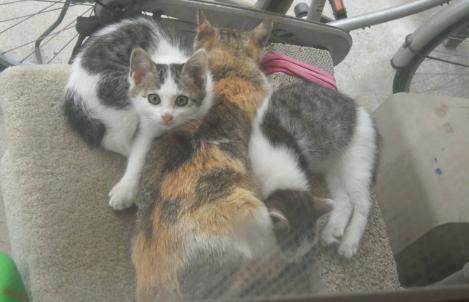 野良猫親子がネコタワーに住みはじめ昼寝中に子猫もデジカメ写真撮影に驚くのだった