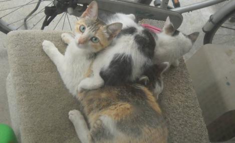 親猫の体に乗り寄り添い子猫2匹のデジカメ写真撮影に親猫が気づくのであった