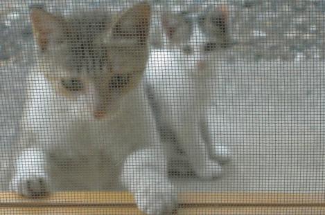 子猫は腹が減ったので縁台のエサを食べに上って来た瞬間をデジカメ撮影しましたわ