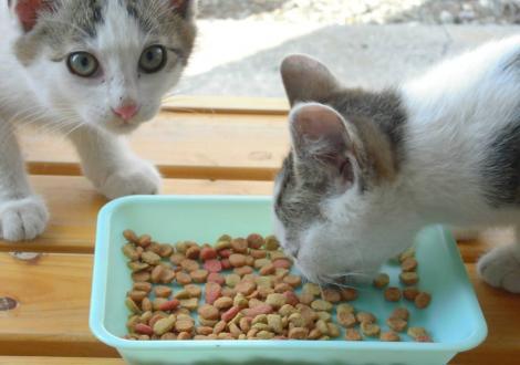 子猫たちは縁台に乗せたエサを食べ始めた所をデジカメ写真撮影しました
