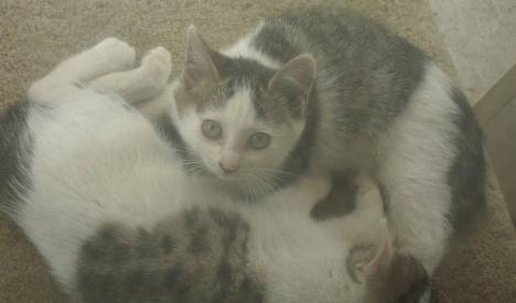 子猫たちはエサとお乳を飲んで満腹で寝る直前をデジカメ写真撮影しました