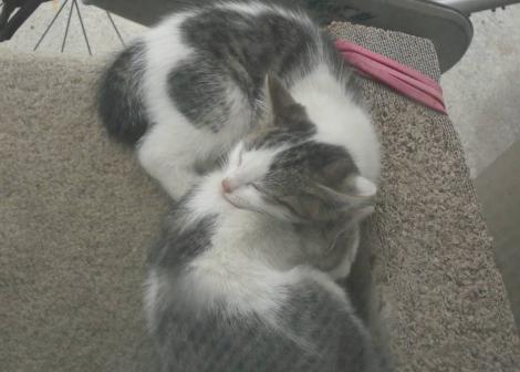 子猫たちはエサとお乳を飲んで満腹で幸せいっぱいで寝始めた時のデジカメ写真撮影です
