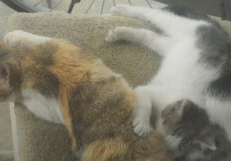 夕方に野良猫出身の地域猫親子は乳を飲みながら寝ていたのをデジカメ写真画像で撮らせてもらったぜい