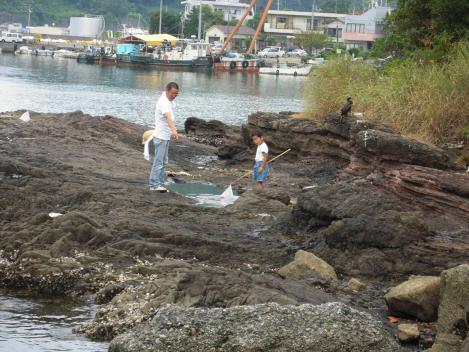 孫の夏休みで爺さんが孫と磯で海水たまりで何を捕っているだろうかをデジカメ写真撮影しました