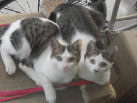 野良猫出身の地域猫の猫兄妹の2匹をデジカメ写真で撮れた
