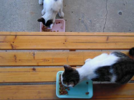 兄妹猫の兄は上で妹は下側でエサを食べているところをデジカメショットっした
