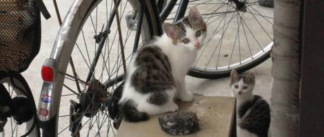 つい最近までは可愛い子猫兄妹だった2匹をデジカメ写真撮影していた