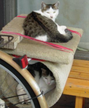 テラスのキャットタワーで寝起きの兄妹猫をデジカメ撮影した上が兄のイッコで下が妹のニコです