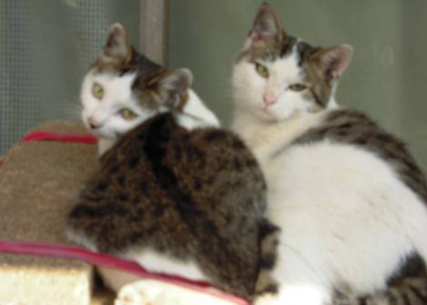 2匹の兄妹猫が昼寝中に嫁が洗濯物を干してる時に起き振り向きざまの光景をデジカメ撮影した嫁