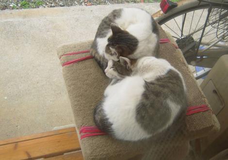 テラスのキャットタワー上で寝る兄妹猫だが兄猫の方が偉いのか妹猫の上に被さる光景をデジカメ写真撮影した