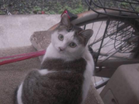 兄妹猫の兄猫が日本の政治につぶやいてる