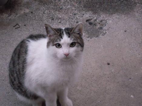 兄妹猫の妹猫ニコちゃんも日本の間違ってる政治につぶやいてるデジカメ写真画像