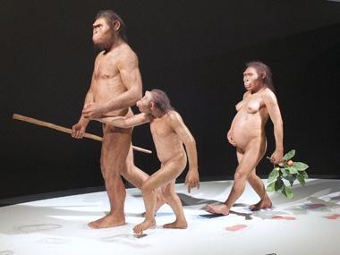 7アファール猿人0514