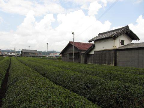 市場の茶畑