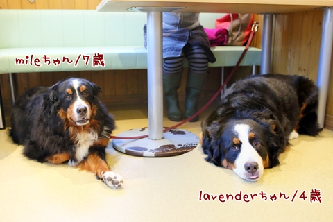 mile & lavender