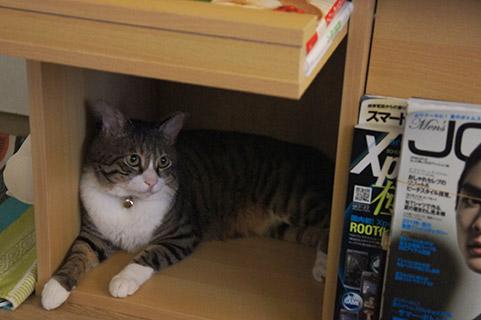 本棚スペースは落ち着くね