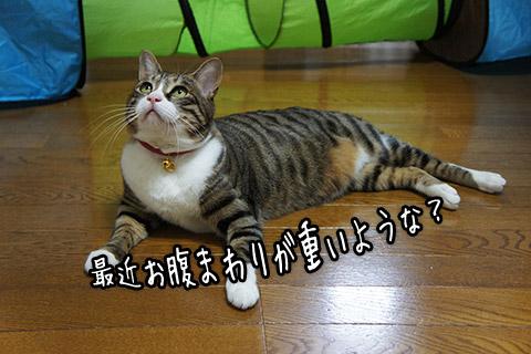tom110122_01.jpg