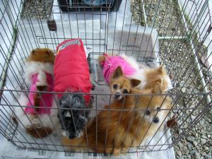 小型犬5匹