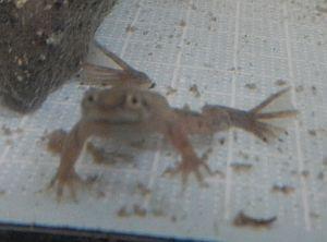 ヒメツメ2