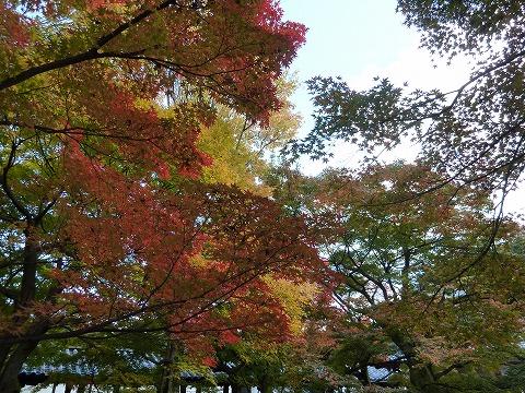 20121118_140634_Panasonic_DMC-TZ7.jpg