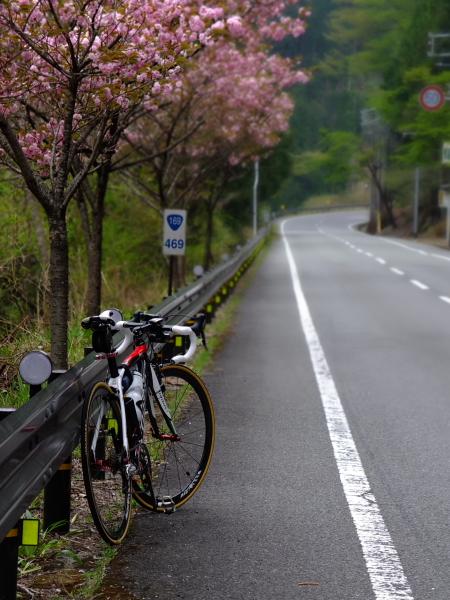 桜ダウンヒル