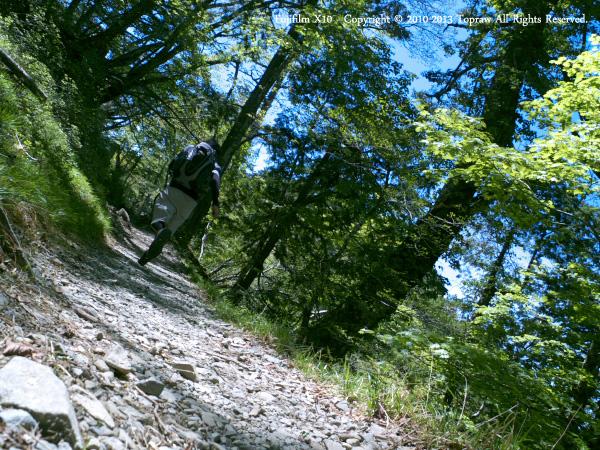 山上ヶ岳028トレイルラン