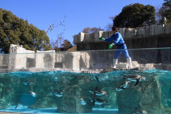 TobeZoo ペンギン餌やり 140129 002