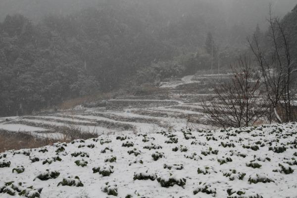 滑川渓谷・降雪 140206 13