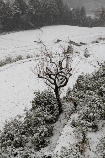 河之内大屋敷・降雪 140206 03