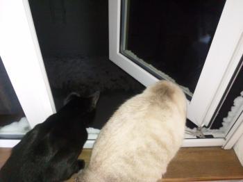 五郎も窓の外