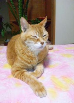 猫の王国ガル