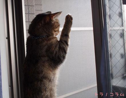 野次猫ニャ