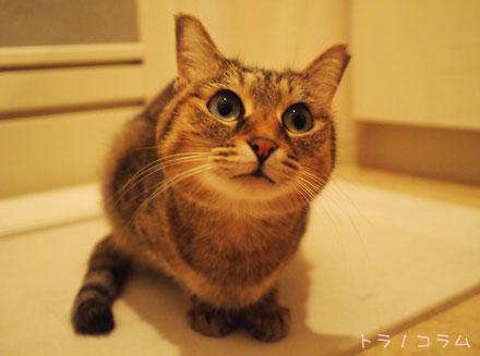 お風呂場にゃの。