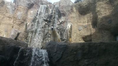旭山動物園5
