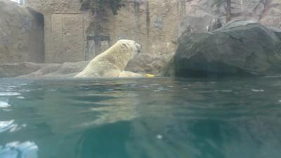旭山動物園4