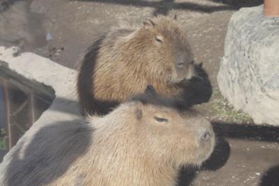 旭山動物園21