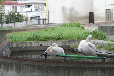 旭山動物園22