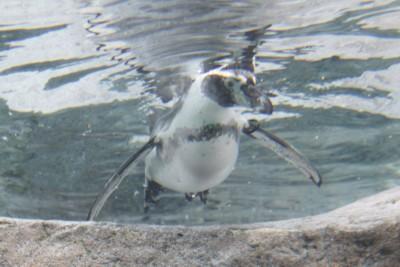 ペンギン9