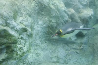 ペンギン6
