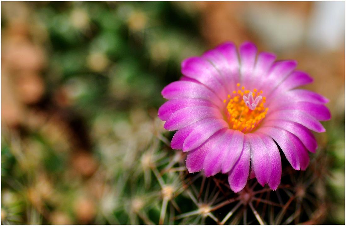 咲くやこの花館・助手3