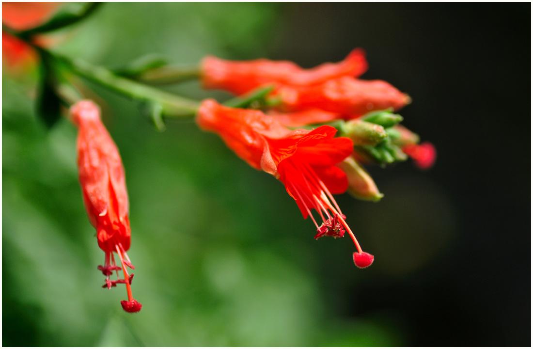 咲くやこの花館・助手5