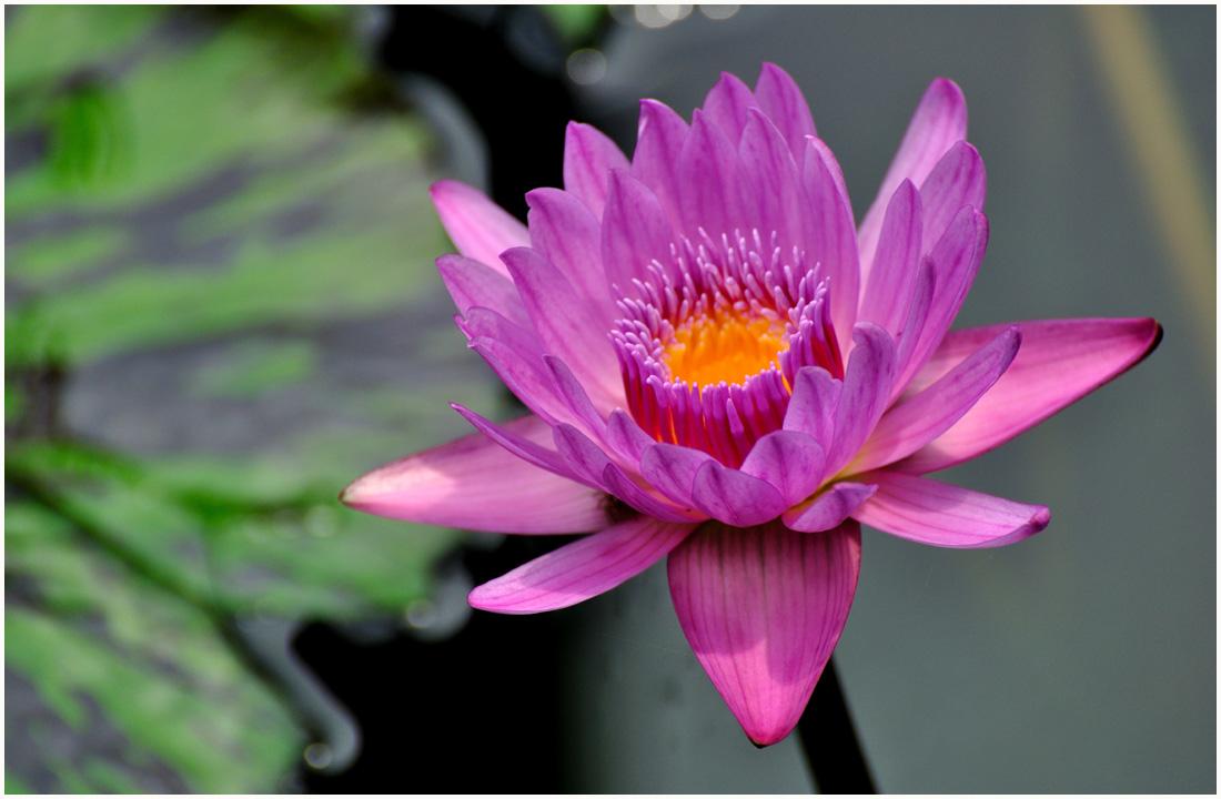 咲くやこの花館・助手1