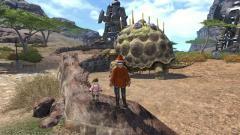 大きい亀を見る二人