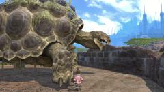 亀とララフェル