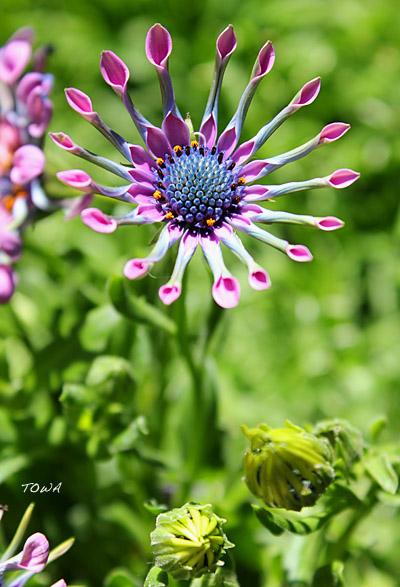 gardeningop2.jpg