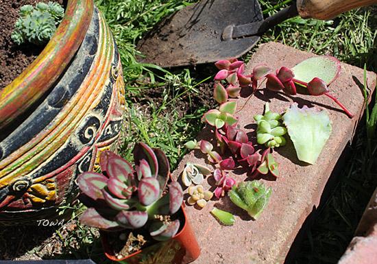 gardeningop3.jpg