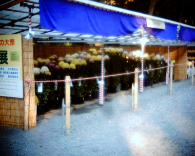 明治神宮秋の大祭奉祝 菊花展:Entry